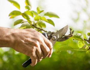 ¿Qué árboles y arbustos podar en primavera?