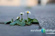 La extinción de plantas, malas noticias para todas las especies