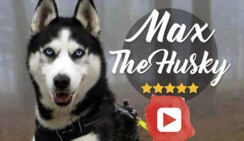 Max the husky, el perro que habla