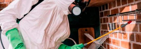 Las plagas durante la pandemia