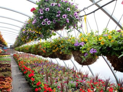 Frutales, aromáticas y plantas de flor, los candidatos a superventas de primavera en Dijardín