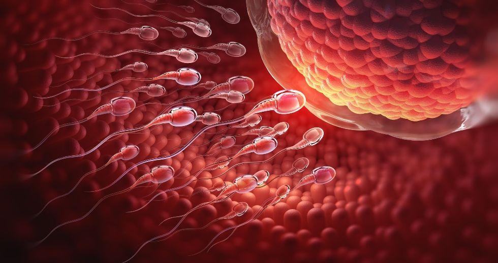 Confirman la eficacia de antioxidantes en la mejora de la fertilidad masculina