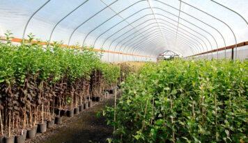 ¿Cómo funcionan los viveros de plantas?