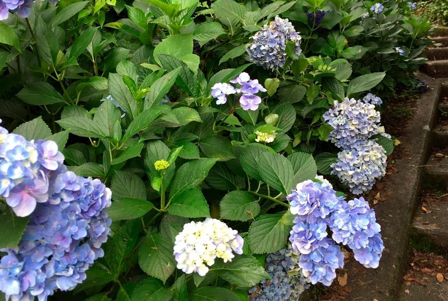 Viveros de plantas ornamentales