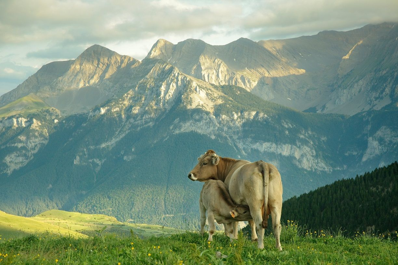 El sector del Vacuno de Carne refuerza sus compromisos con el consumidor y el medio ambiente