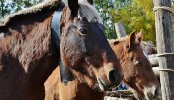 El 6 y 7 de noviembre llega la Fira del Cavall de Puigcerdà, una de las más importantes de Europa